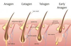How Does Hair Grow